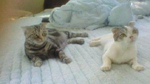 猫のお世話|逆瀬川はうじんぐスタッフ紹介